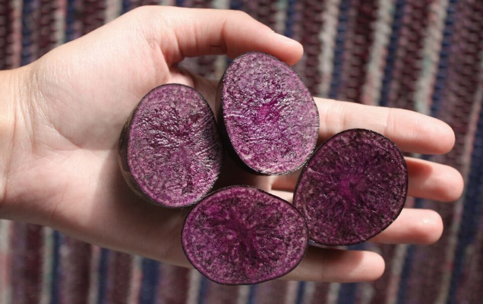 Peruvian purple foods potatoes