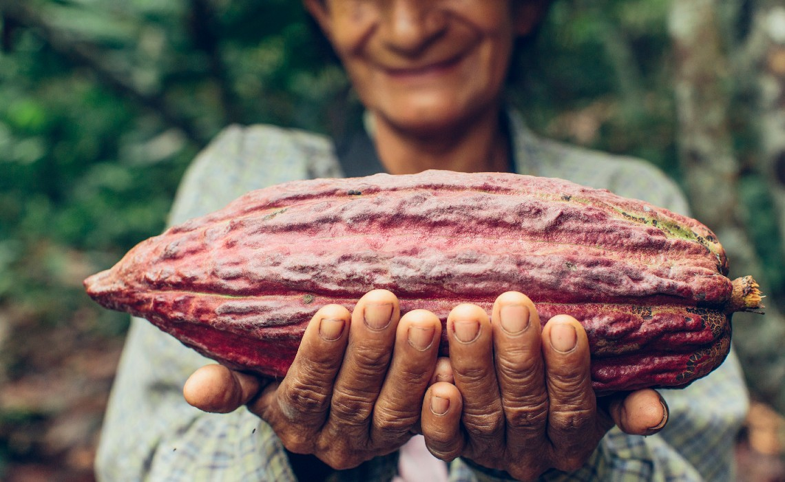 Cacao Chocolate Amazon Peru
