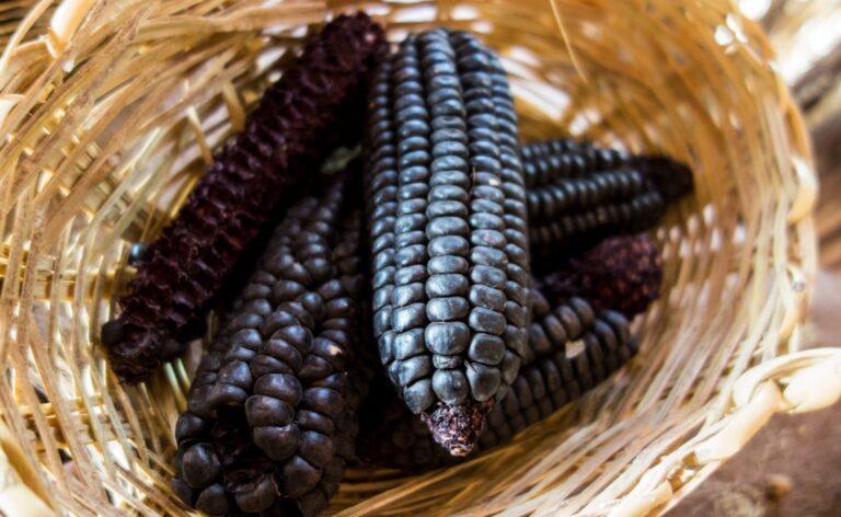 benefits purple corn