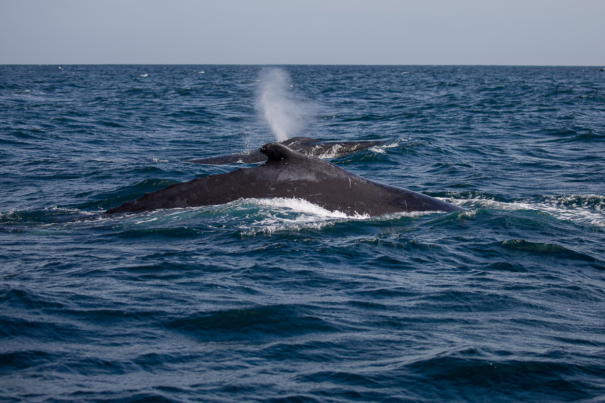 Whale Watching in Peru: The Tour Experience
