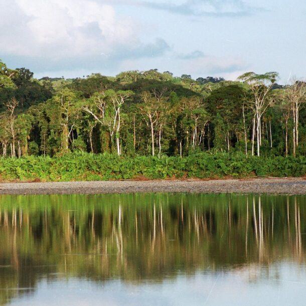 Manu National Park reforestation