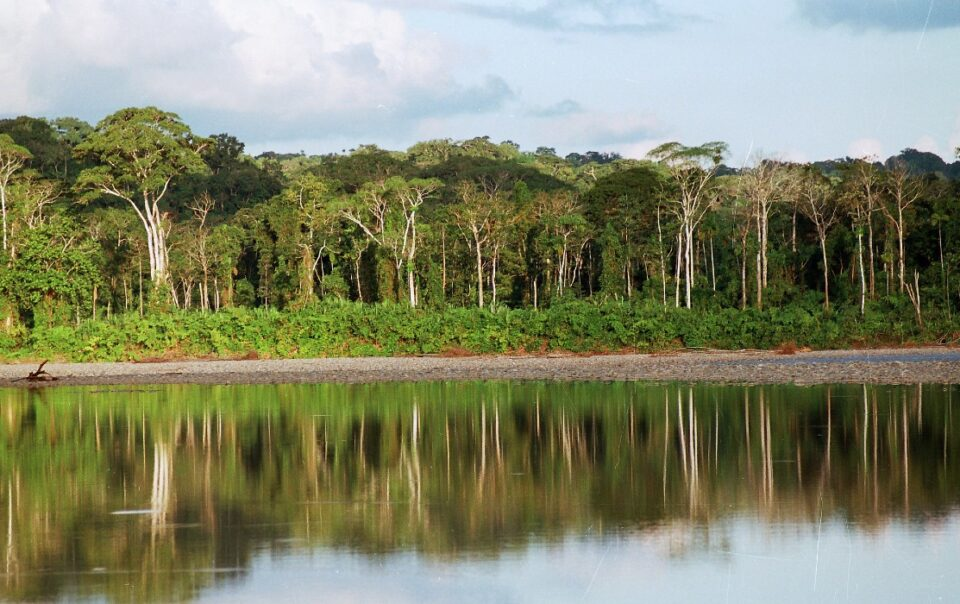Manu National Park reforestation