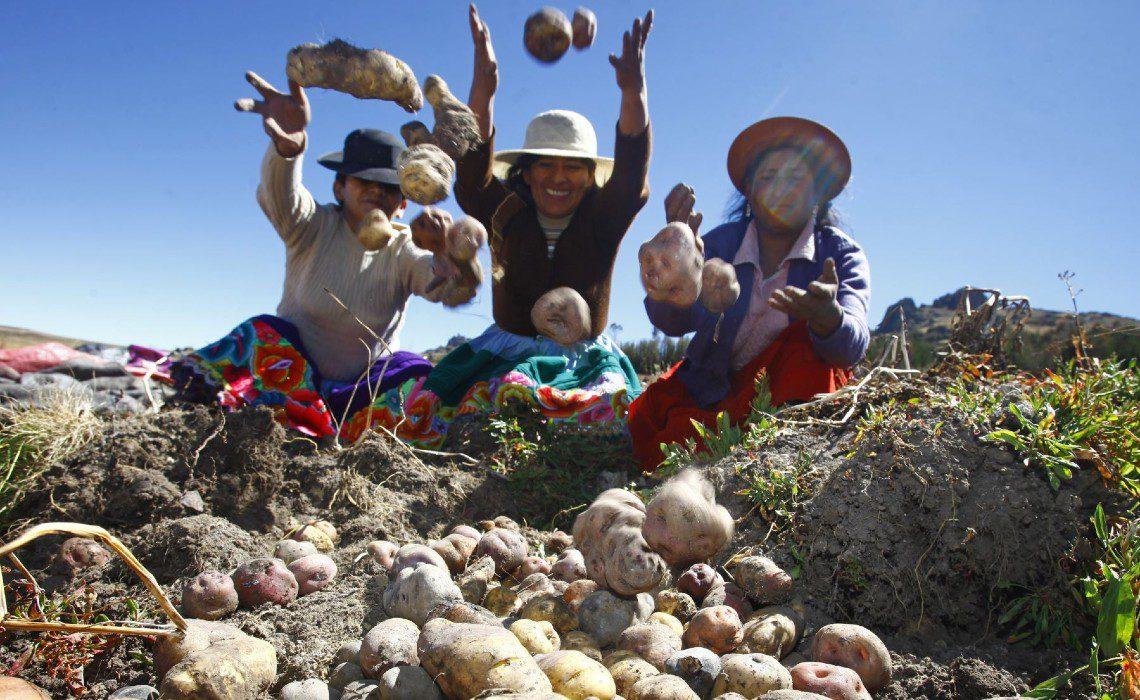 andean potatoes peru