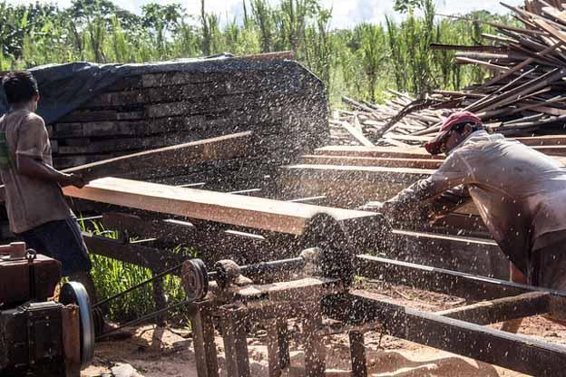 illegal logging peru