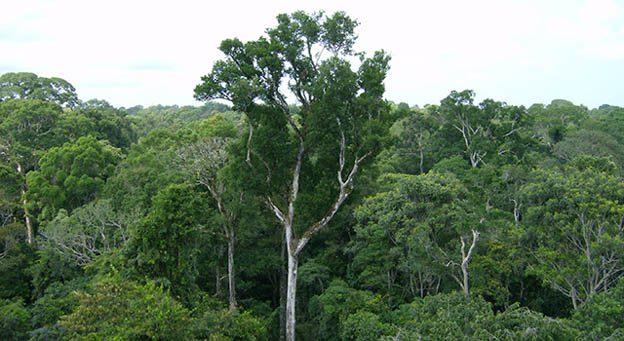 peru logging 3