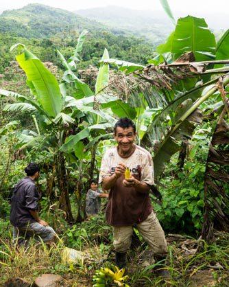 jungle locals