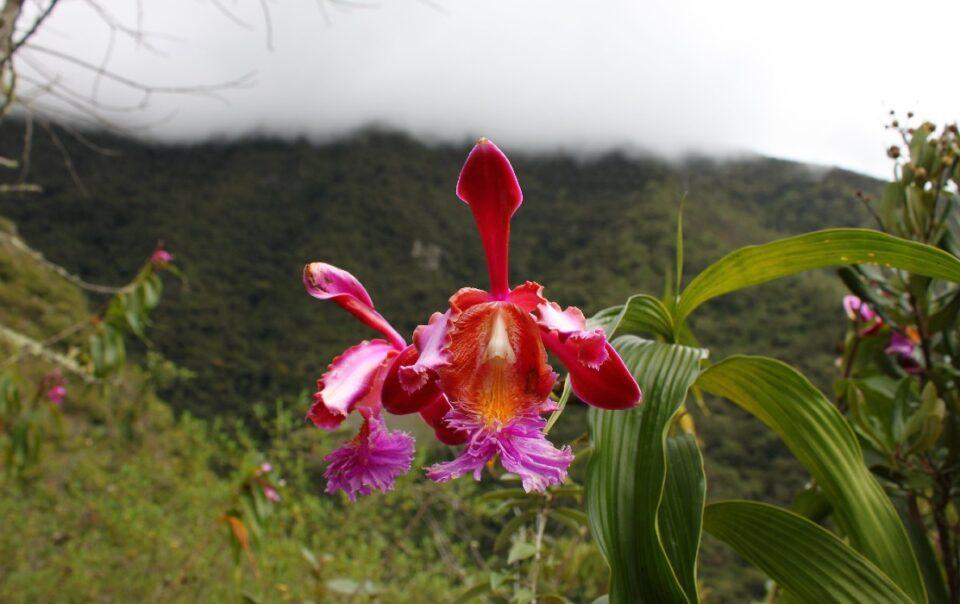 Orchid Trail Machu Picchu Peru