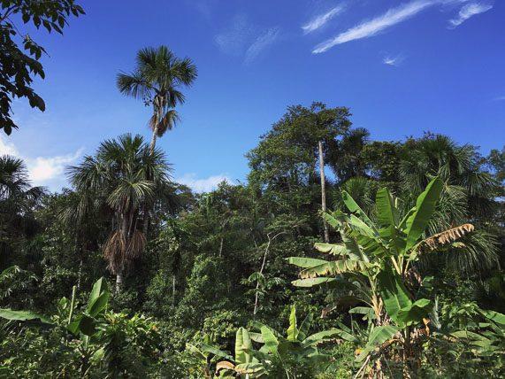 amazon-farming