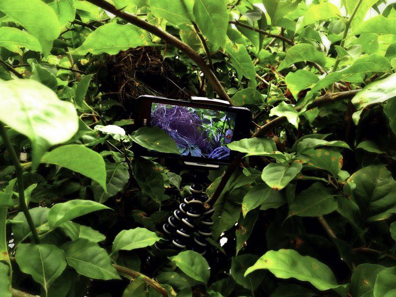 smartphone jungle wildlife