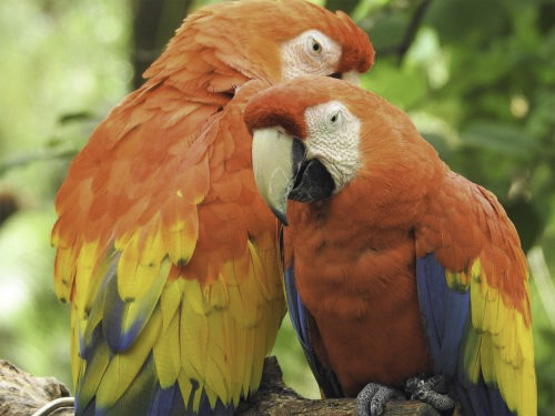 parrot peru smartphone