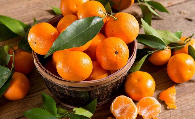 mandarin andina