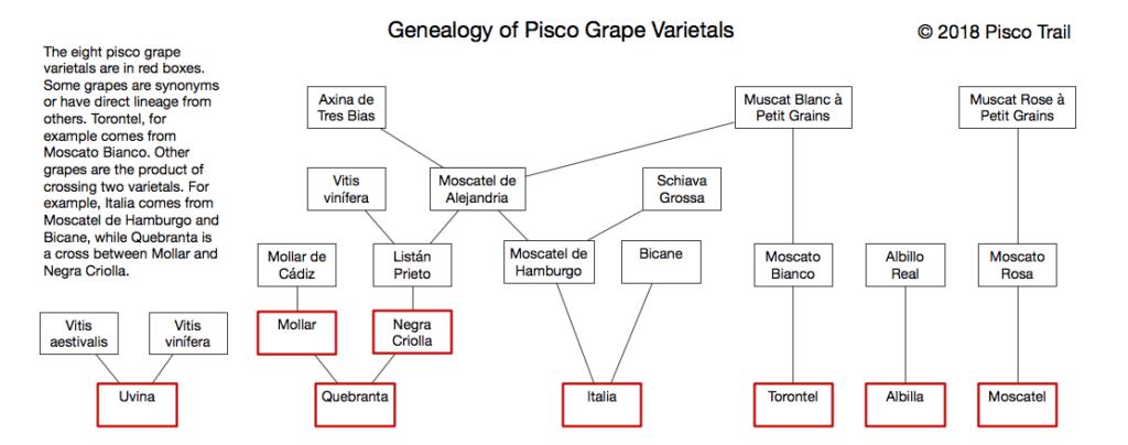 The genealogy of pisco grape Varietals