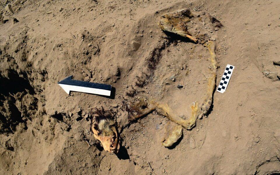 proyecto arqueologico sechin