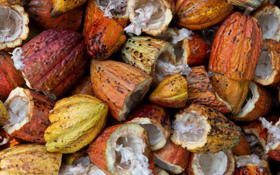 cacao health benefits peru