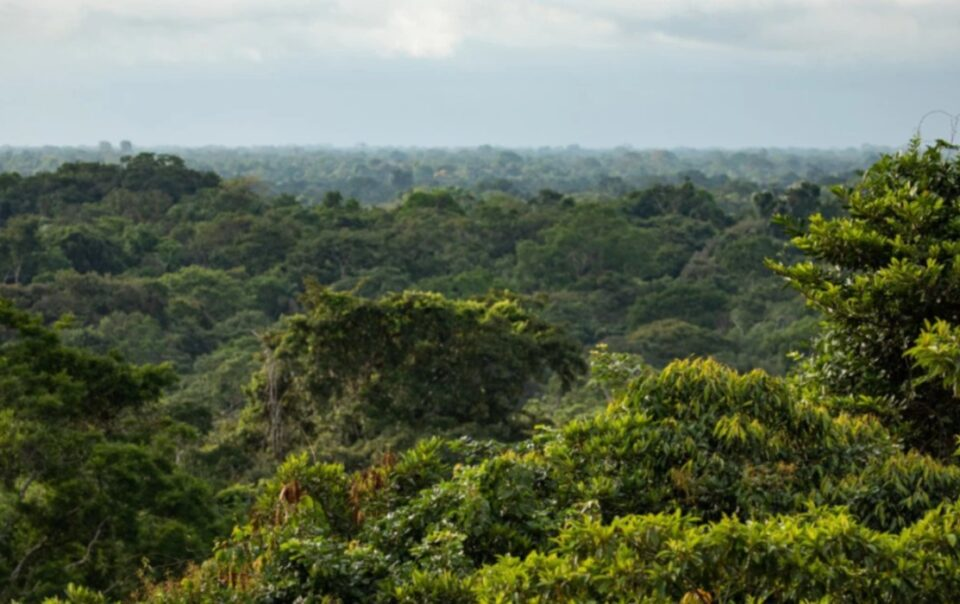 Maps Allow Indigenous Communities to Safeguard the Amazon in Peru