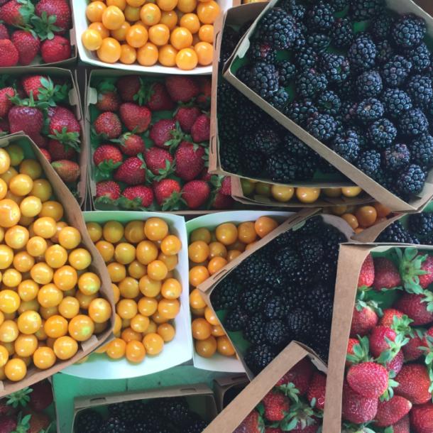 bioferia-berries