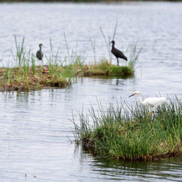 pantanos de villa andina (1)