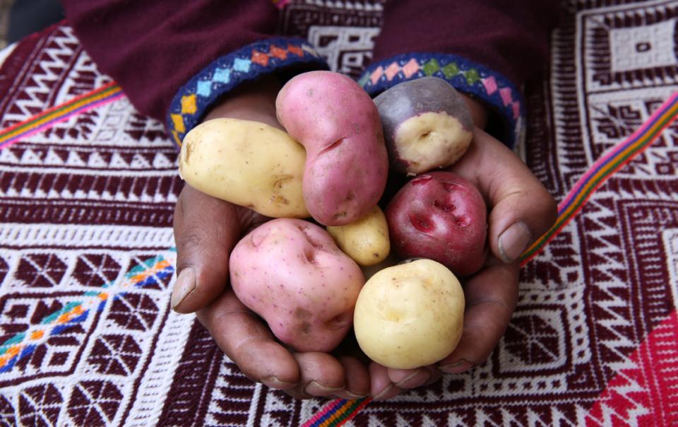 perus-potato-museum
