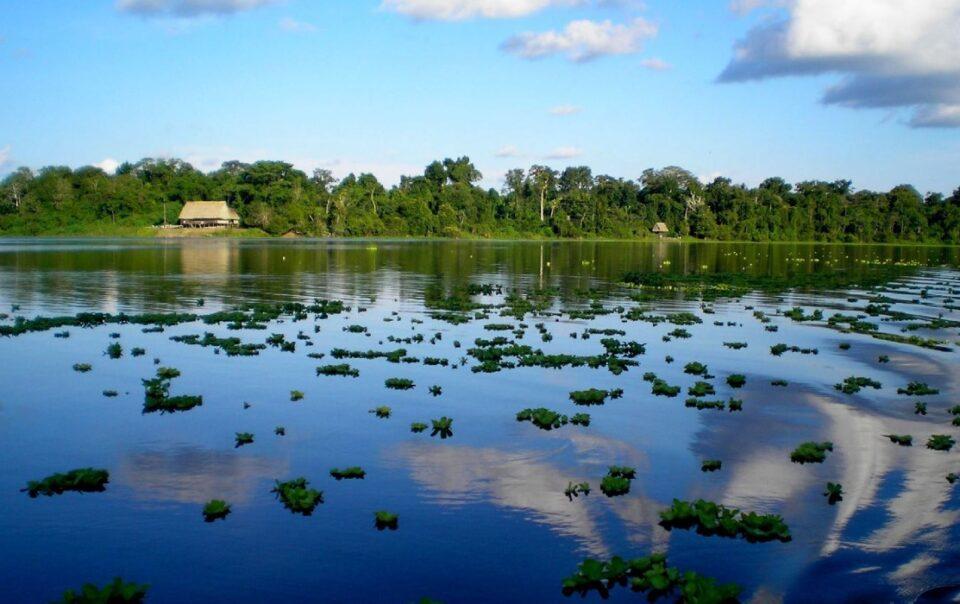 amazon wetlands andina