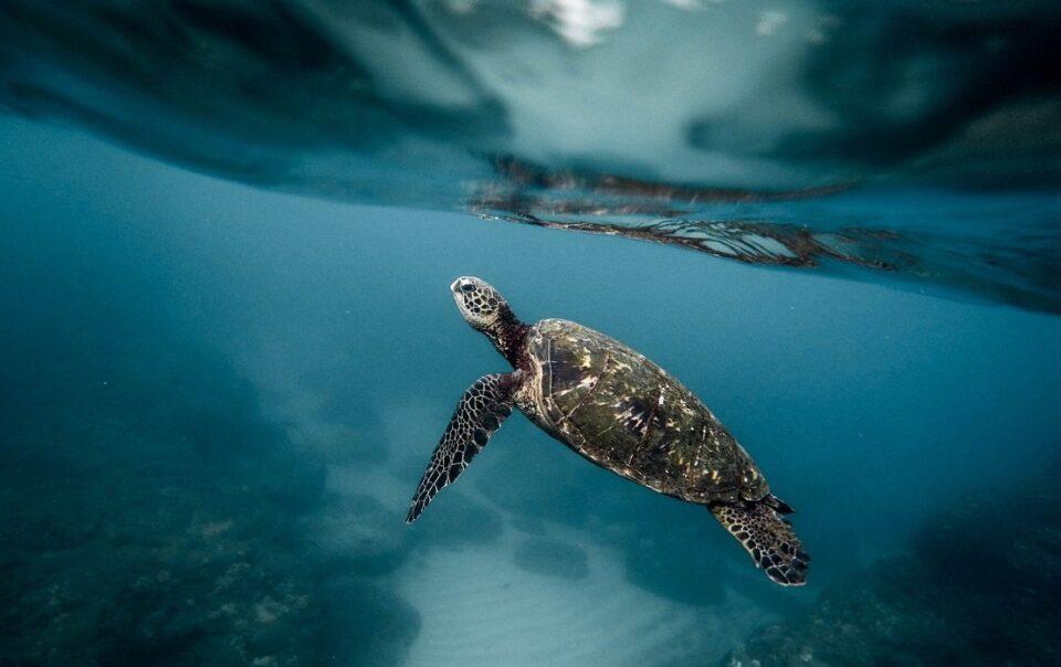 eco-tourism-northern-peru