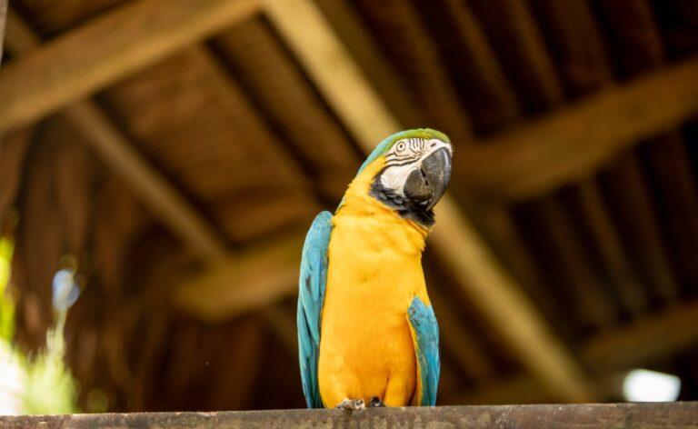 AmaraPhotos-iquitos-amazon