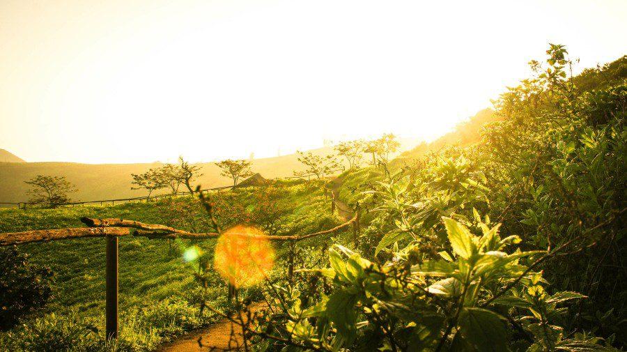 sunset0lomas-de-lachay