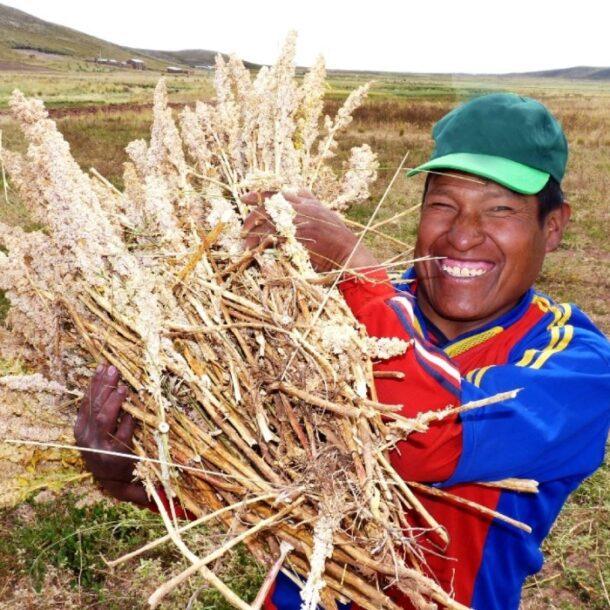 Andean grains seeds beans