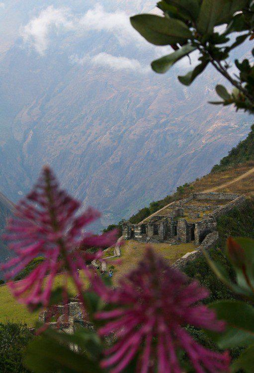 Choquequirao-trek-flora