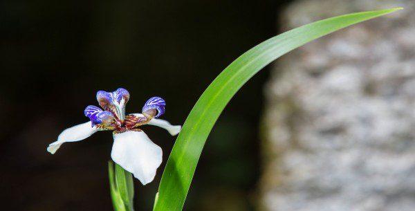 Machu-Picchu-Peru-Orchids
