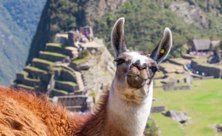 Experience Peru from your home