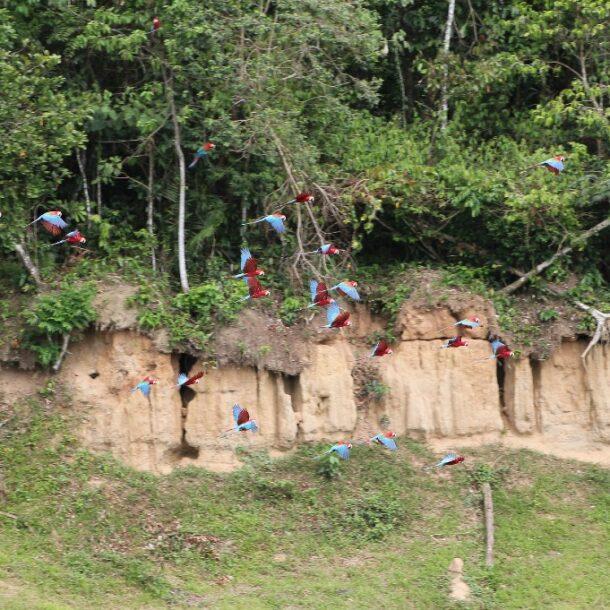 Visit Manu National Park Peru Amazon